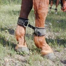 horse-hobbles