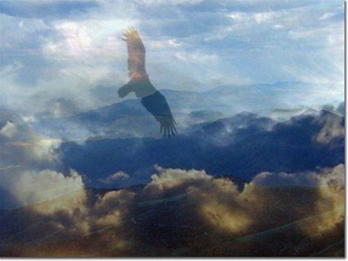 prophetic eagle