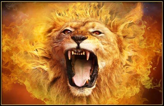lion roars6
