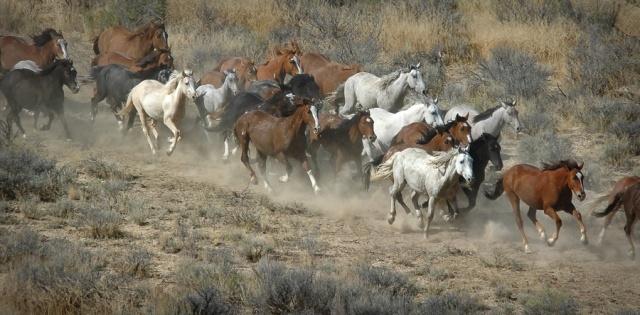 horses running best