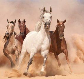 Horses-Wallpaper-SM