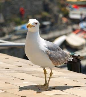 seagull-on-the-roof-of-a-house