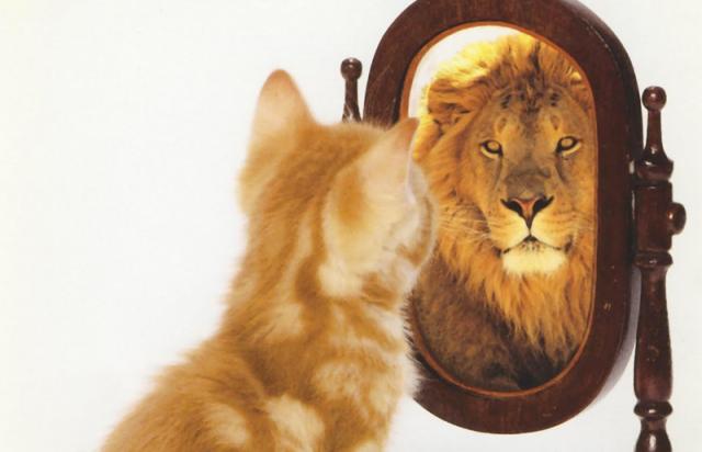 cat-lion-mirror-sm